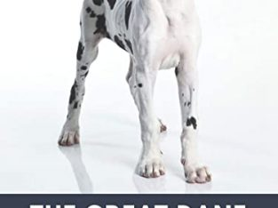 Wanted Great Dane pup